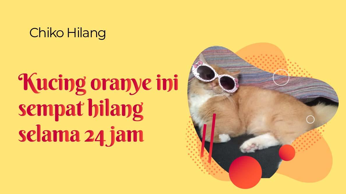 Kucing oranye